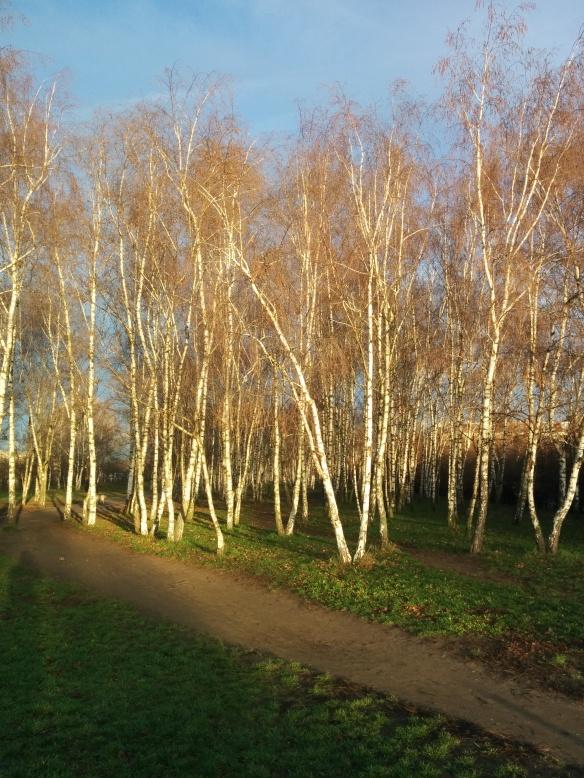 חורף, ברלין, עצים צהובים